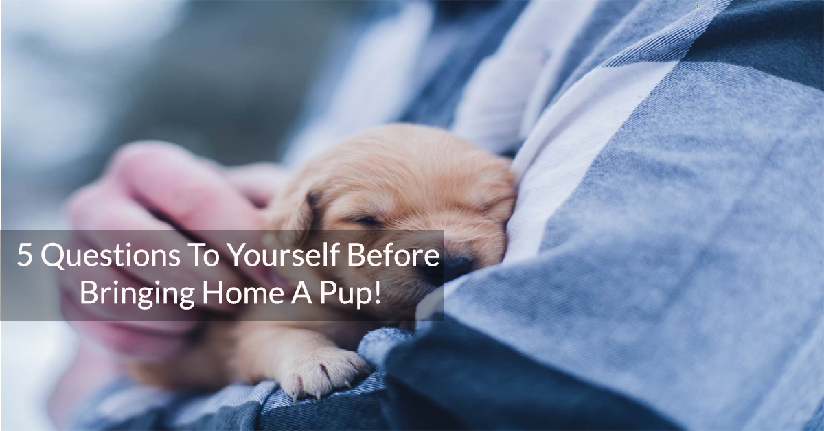 5 Questions To Yourself Before Bringing Home A Pup!