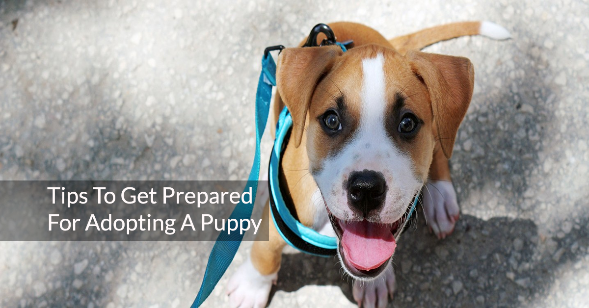 6 Tips To Get Prepared For Adopting A Puppy
