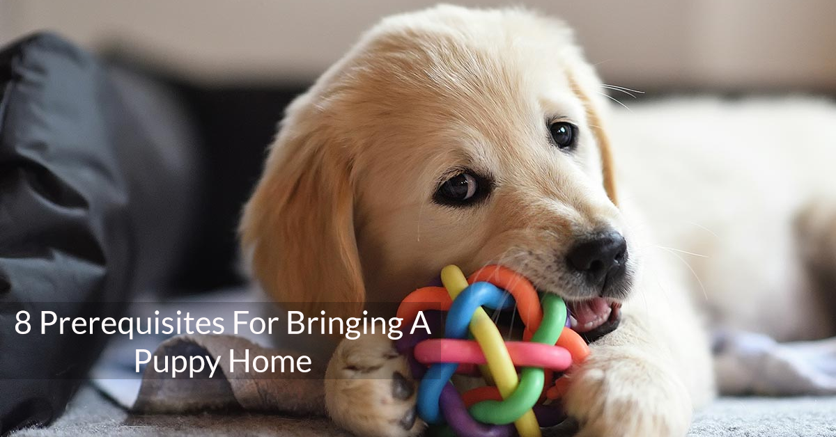 8 Prerequisites For Bringing A Puppy Home