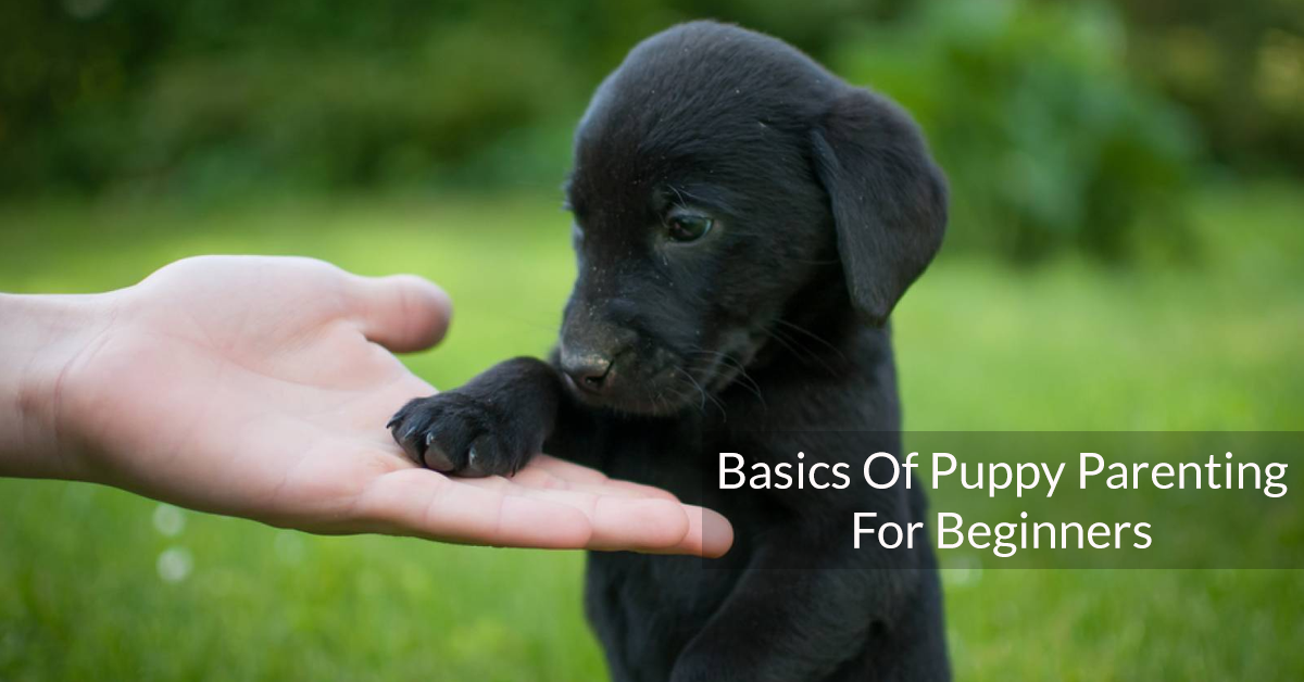 Basics Of Puppy Parenting For Beginners