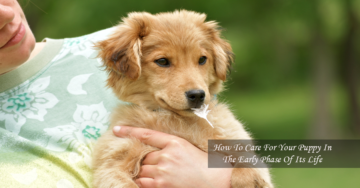 How To Care For Your Puppy In The Early Phase Of Its Life