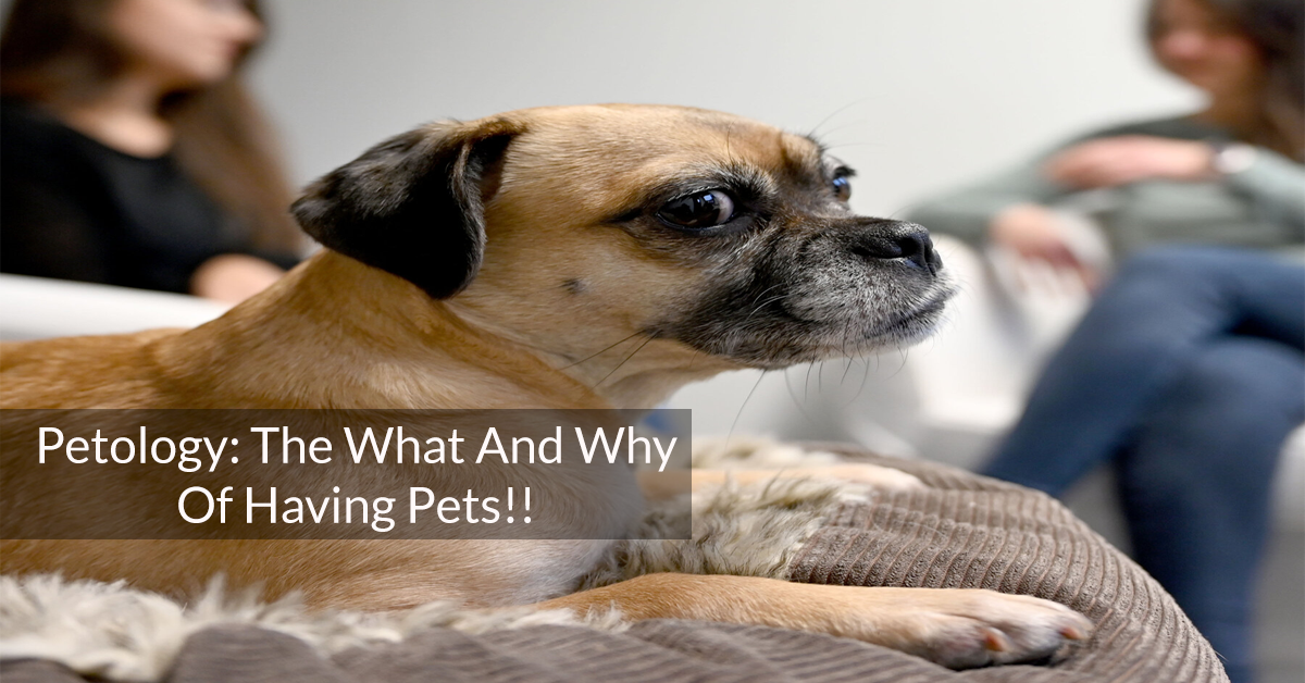 The What And Why Of Having Pets!!