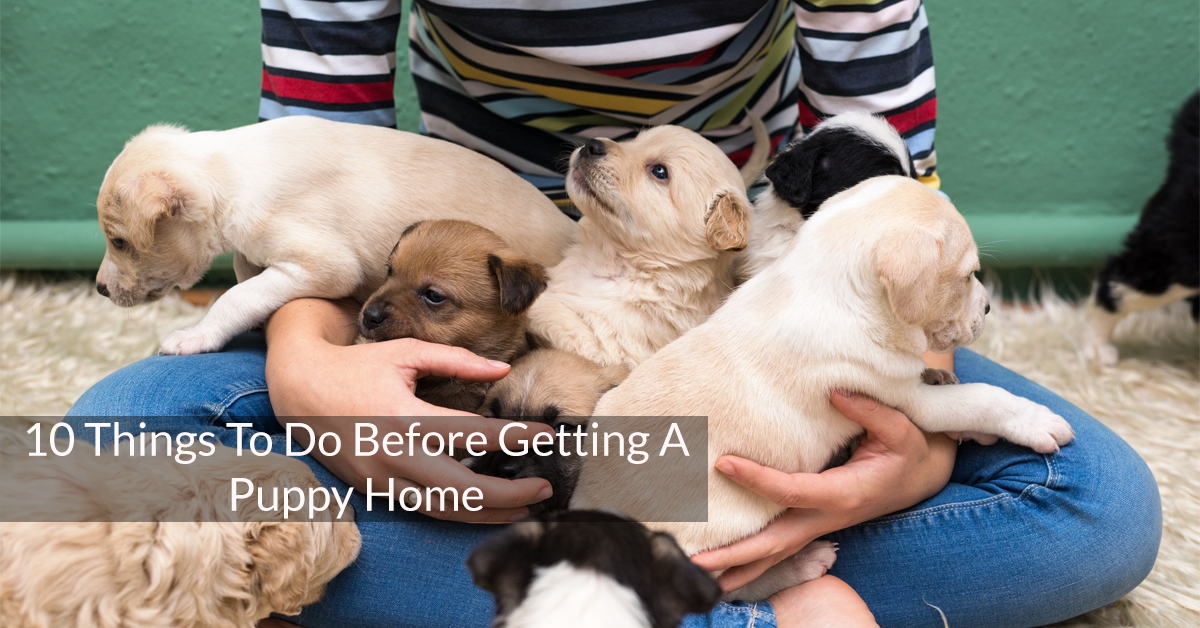 10 Things To Do Before Getting A Puppy Home