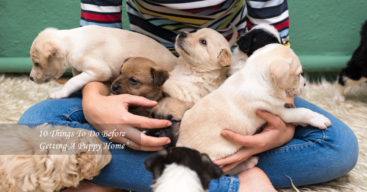 Things To Do Before Getting A Puppy Home
