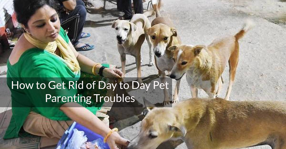 How To Get Rid of Day To Day Pet Parenting Troubles