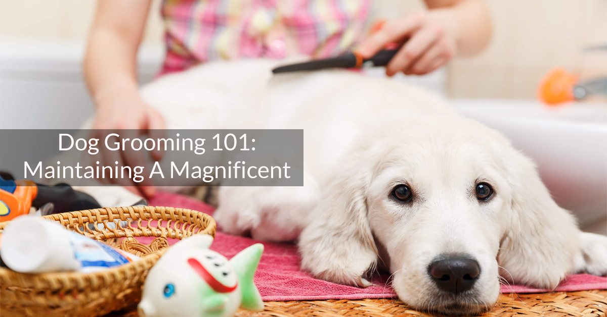 Dog Grooming 101: Maintaining A Magnificent Coat