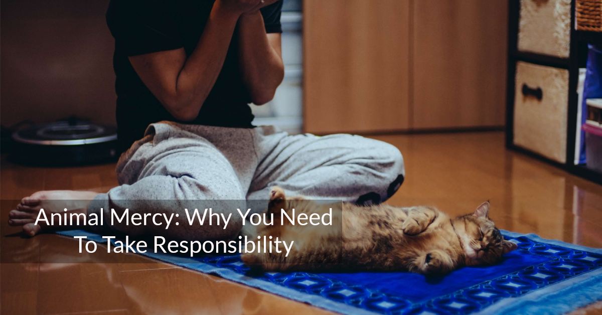 Animal Mercy: Why You Need to Take Responsibility
