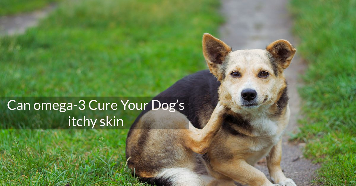 Can omega-3 cure your dog's itchy skin