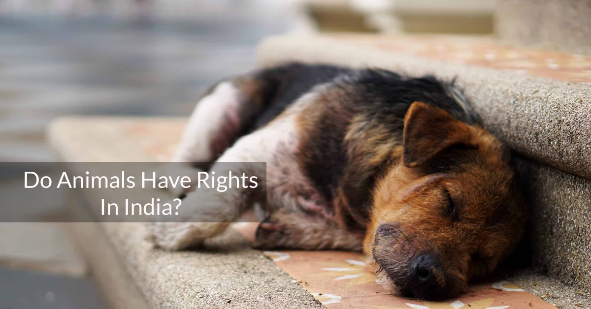Do Animals Have Rights In India