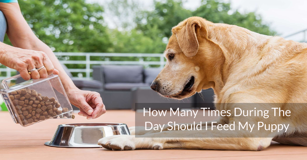How Many Times During The Day Should I Feed My Puppy
