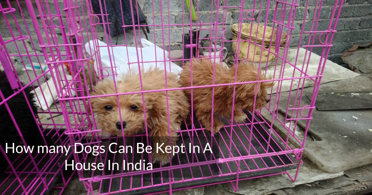 How many dogs can be kept in a house in India