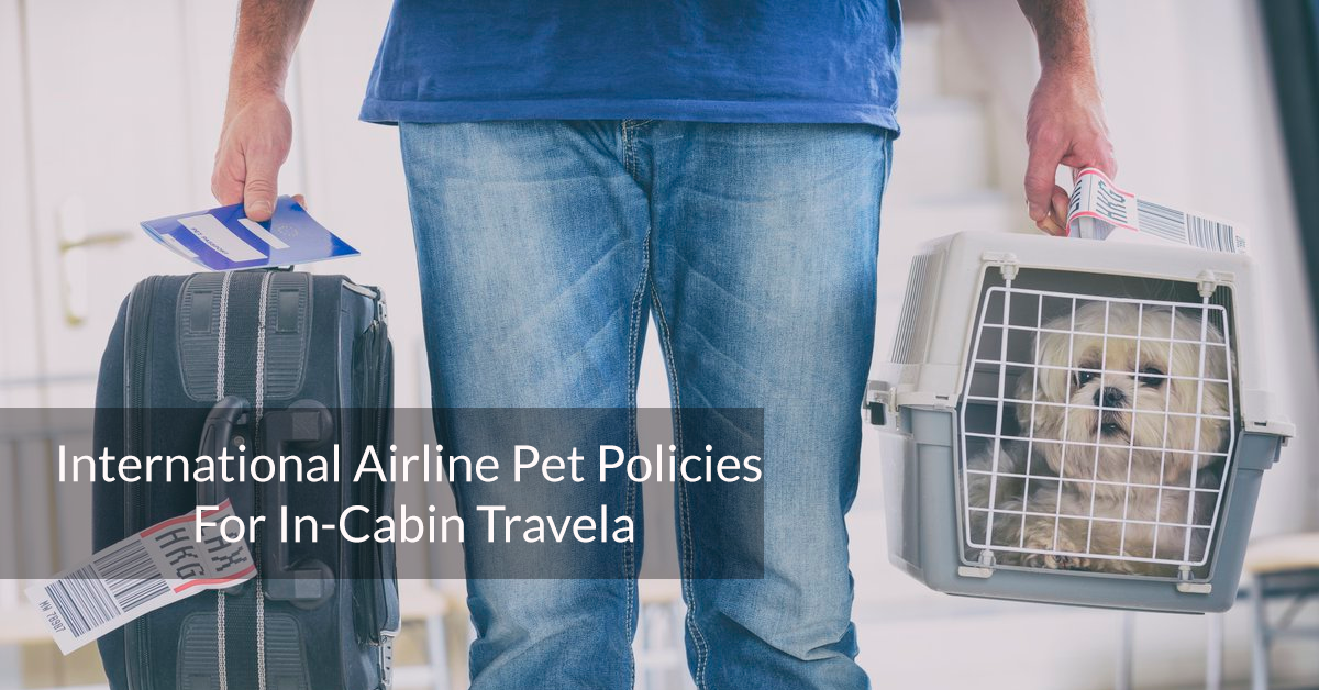 International Airline Pet Policies For In-Cabin Travel