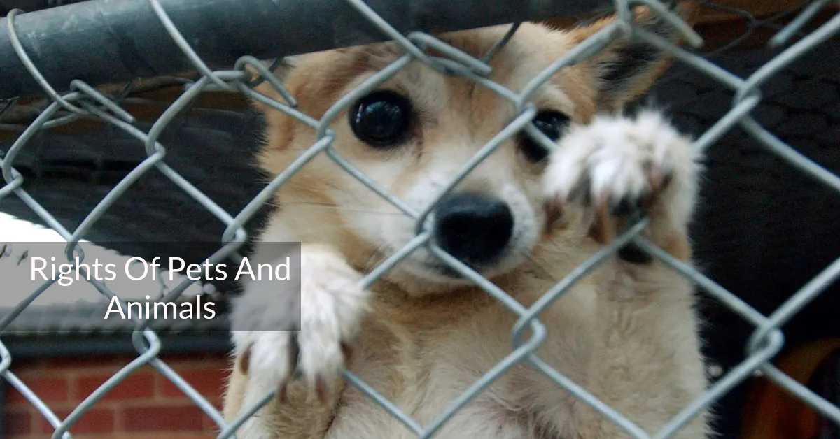 Rights Of Pets And Animals