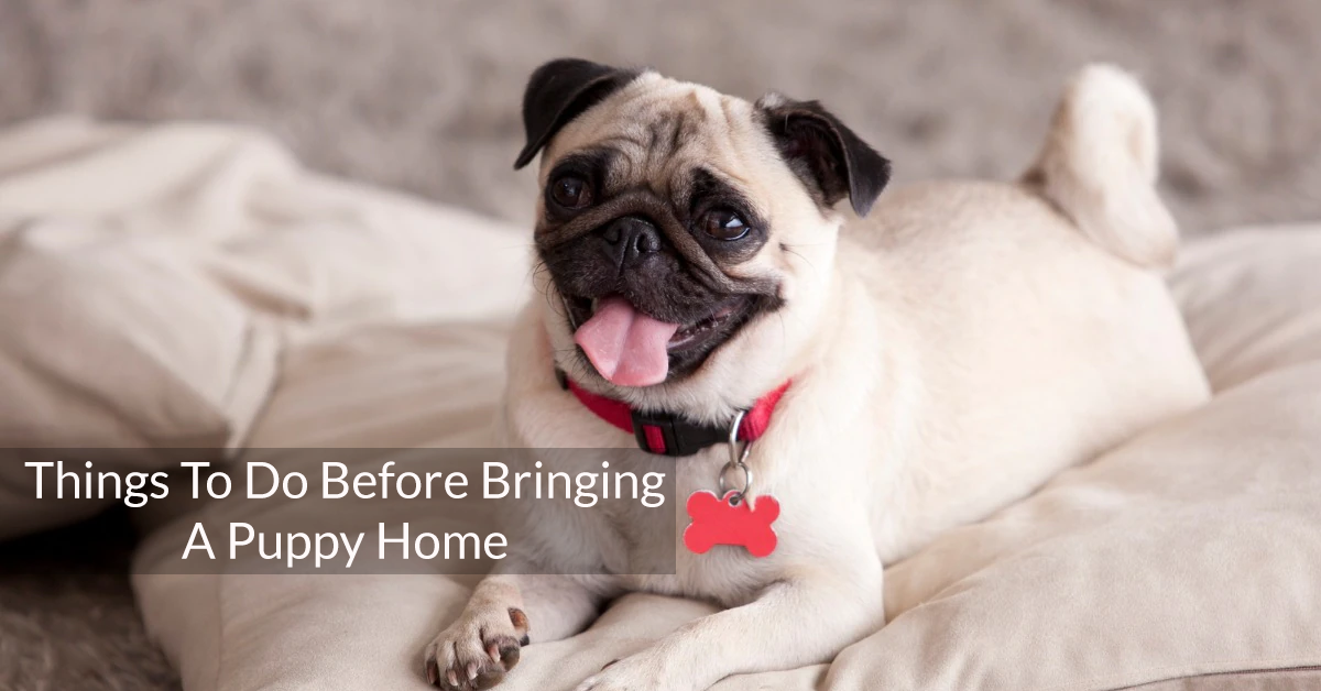 Things To Do Before Bringing A Puppy Home