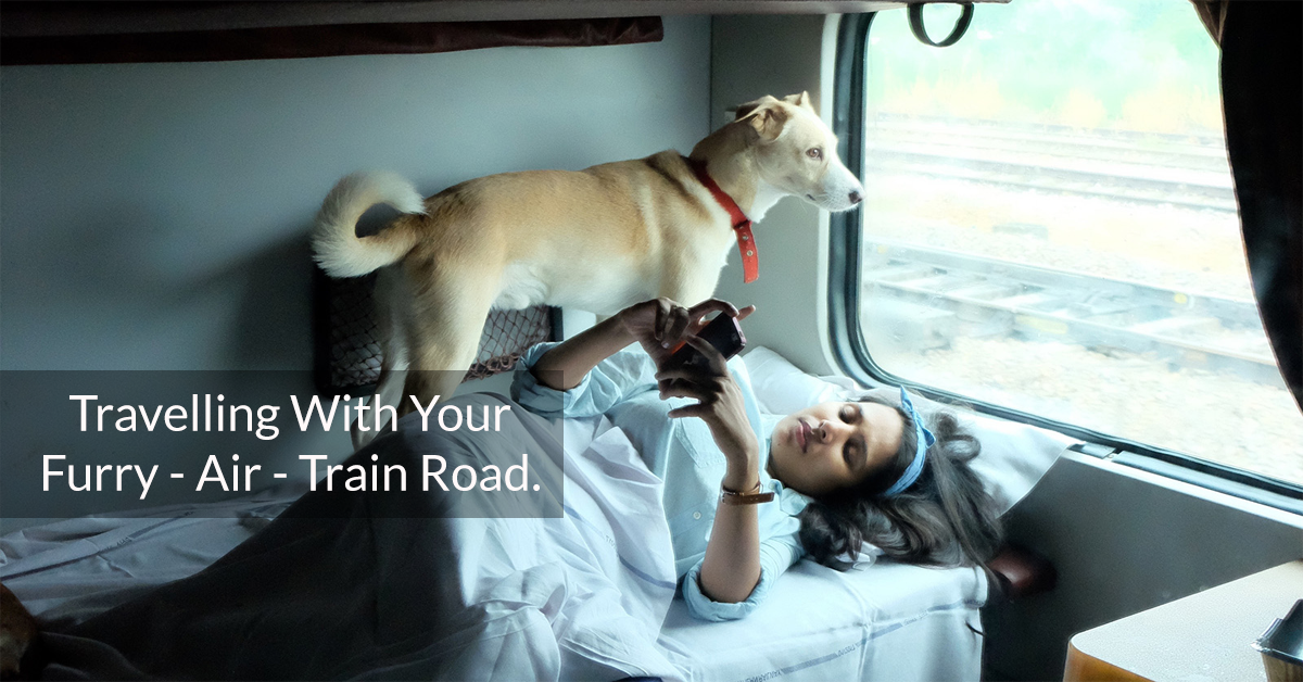 Travelling With Your Furry - Air - Train Road.