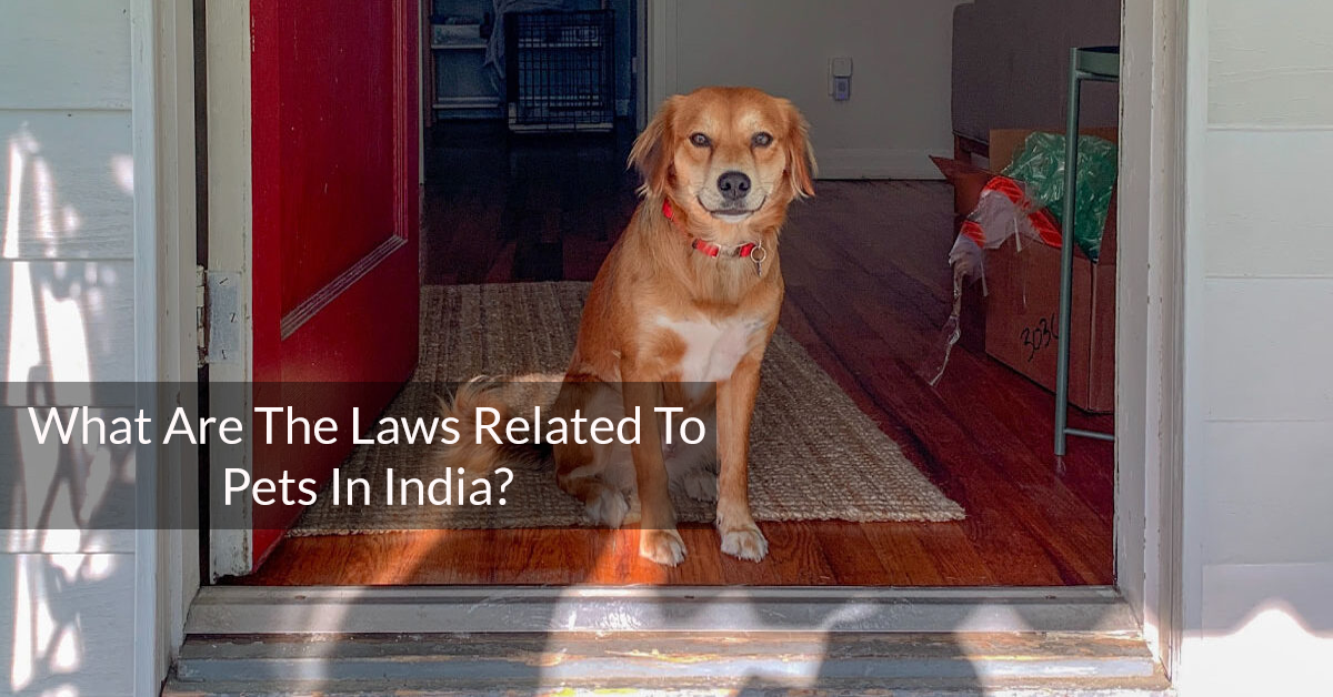 What Are The Laws Related To Pets In India