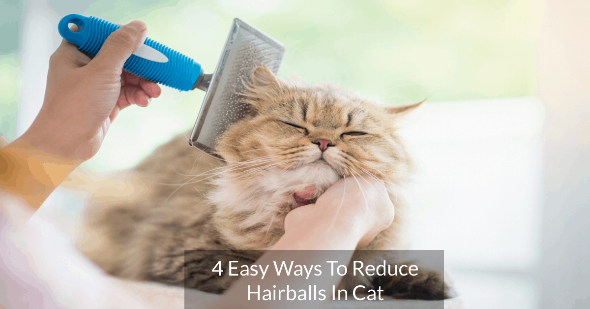 4 Easy Ways To Reduce Hairballs In Cat