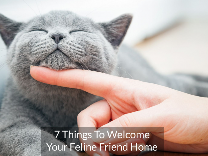 7 Things To Welcome Your Feline Friend Home