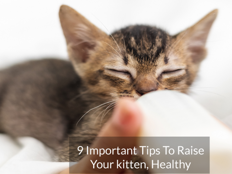 9 Important Tips To Raise Your kitten, Healthy