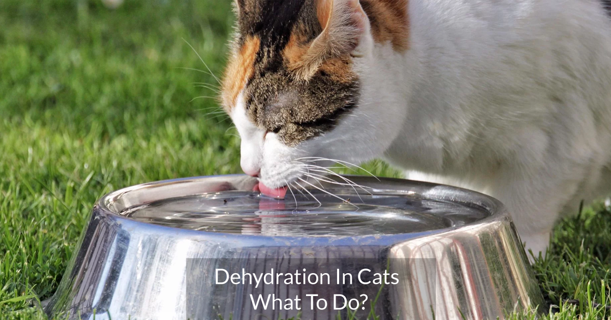 Dehydration In Cats. What To Do?