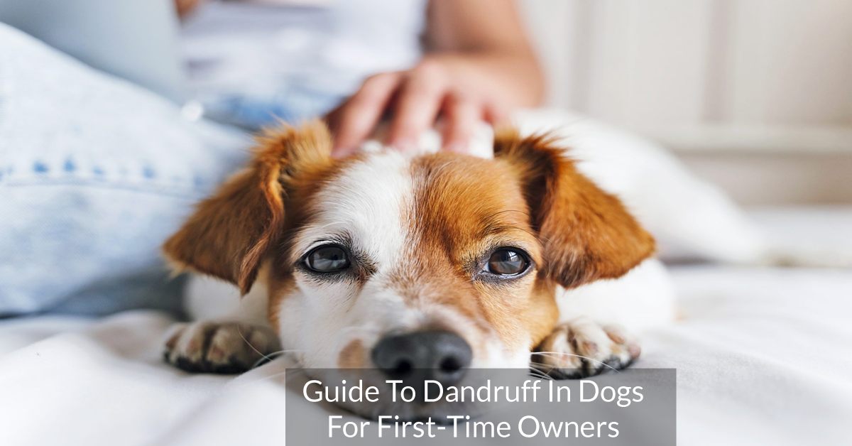 Guide To Dandruff In Dogs For First-Time Owners