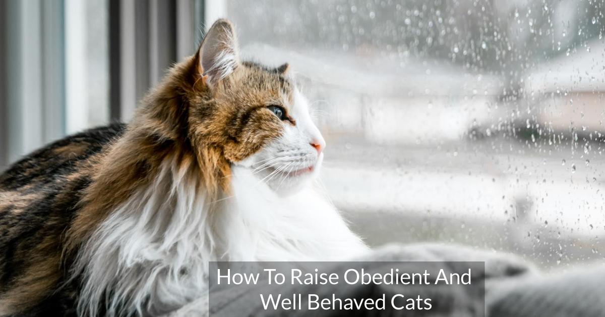 How To Raise Obedient And Well Behaved Cats