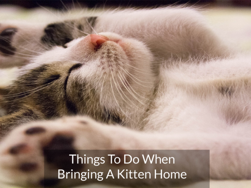 Things To Do When Bringing A Kitten Home