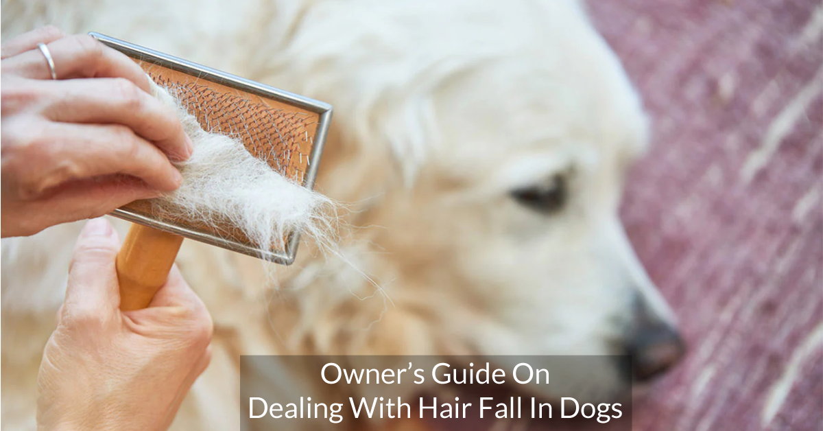 owner's guide on dealing with hair fall in dogs