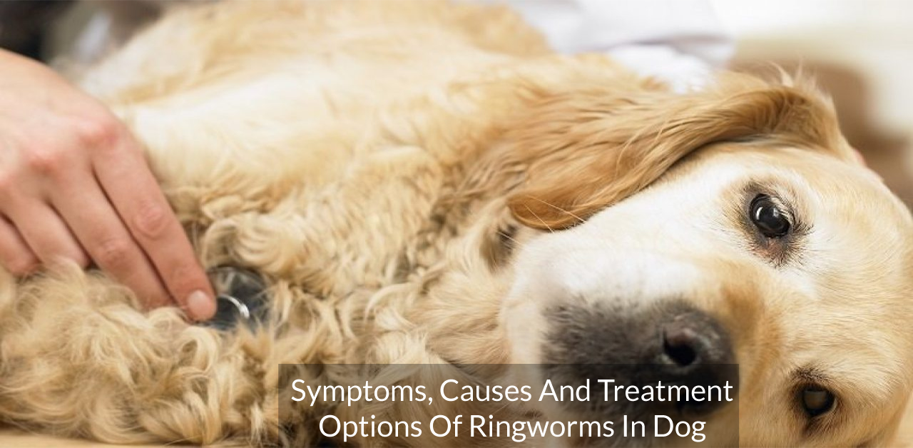Symptoms, Causes And Treatment Options Of Ringworms In Dog