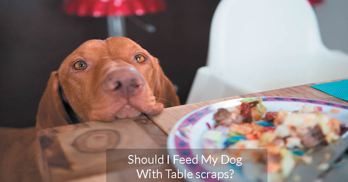 Should I Feed My Dog With Table scraps?