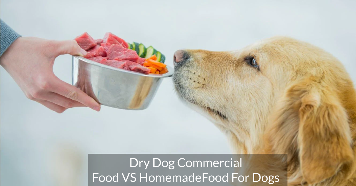 Dry Dog commercial food VS Homemade food for dogs