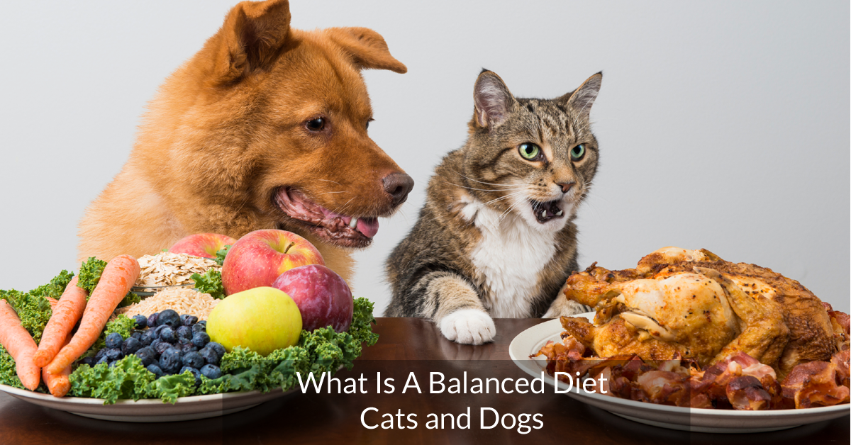 What is a balanced diet for cats and dogs